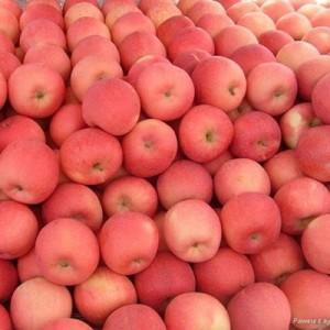 1 Fuji Apple
