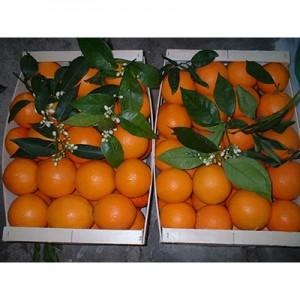 2 Valencia Orange