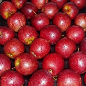 5 South African Red Apple